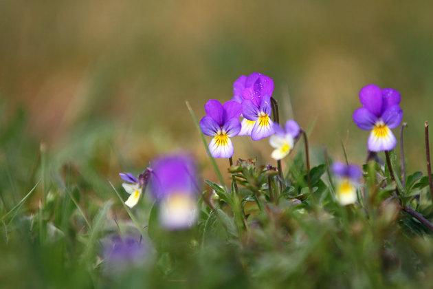 Inget onödigt jobb med naturliga blommor i trädgården!!