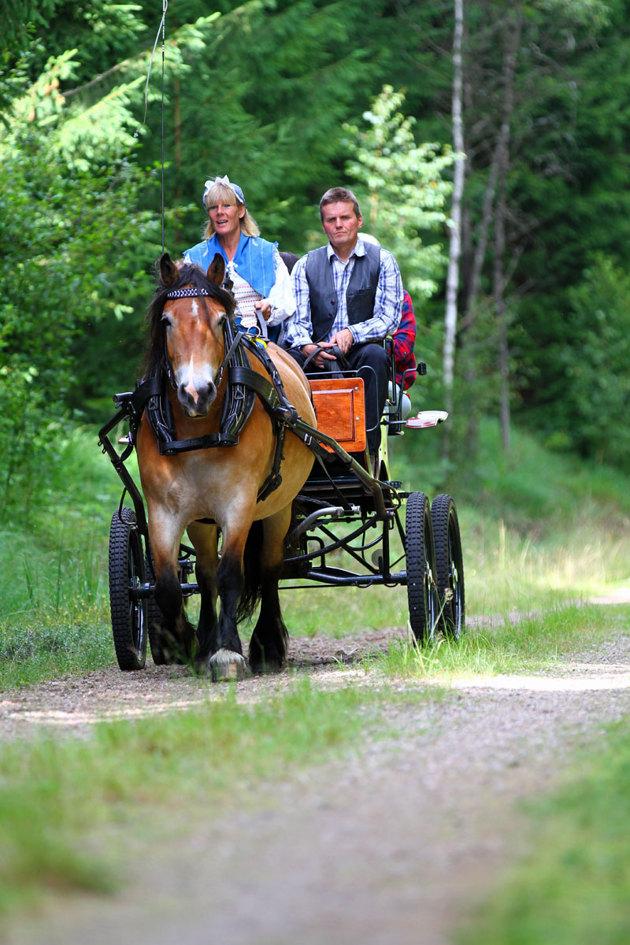 Mitt sätt att visa Bolmenbanan. Det finns mängder med bilder på två hjulspår och ett sjöblänk, men här är det hästen Liiv som fotomodell och vagnen hon drar går inte av för hackor!!