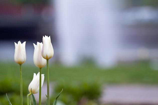 Varför fokusera på vattensprutet när man kan använda den som en snygg bakgrund till blommorna??