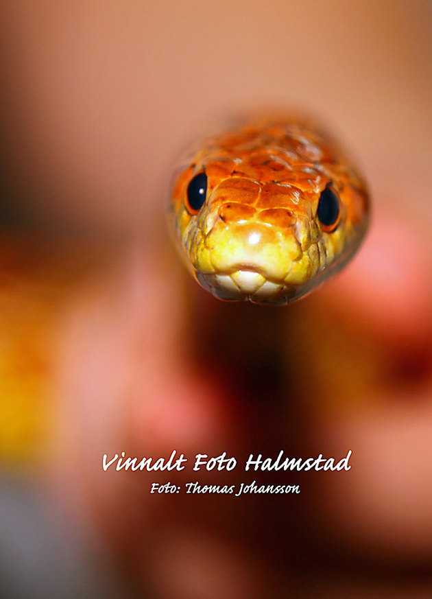 Jag har en rätt tajt fotostil och den gäller även ormar