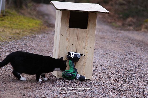 Lite mer jordnära och naturvårdande var lite byggande av fågelholkar i detta fall en Kattuggleholk