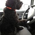 Jag älskar åka bil. 2012