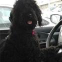 tror du att jag också kan köra