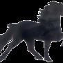 KARLSLUND trailerdekal Islandshäst