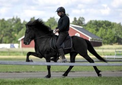 Tyr från Agersta född 2005 fyrgångare med 8.5 alla gångarter och 9 spirit. e. Mökkur u. Rún