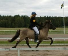 Prinsessa från Agersta född 2002 2:a klass bedömt 4½ gångs avelssto  e. Fannar fra Áudholtshjaleiga u. Drottning fra Ármoti