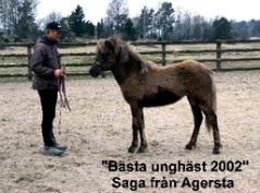 Saga från Agersta bästa unghäst i Sverige år 2002. (Såld).