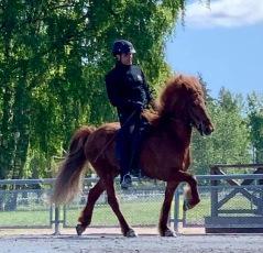 Sveriges högst bedömda unghäst 2012 - Olympia från Agersta visas in i första klass. Ryttare: Erlingur Erlingursson.