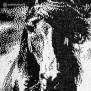 HRÍMNIR Poncho Stallion - 100% Isländsk fårull