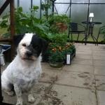 Går gärna in i växthuset en regnig dag