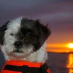 Tea våran båtsman