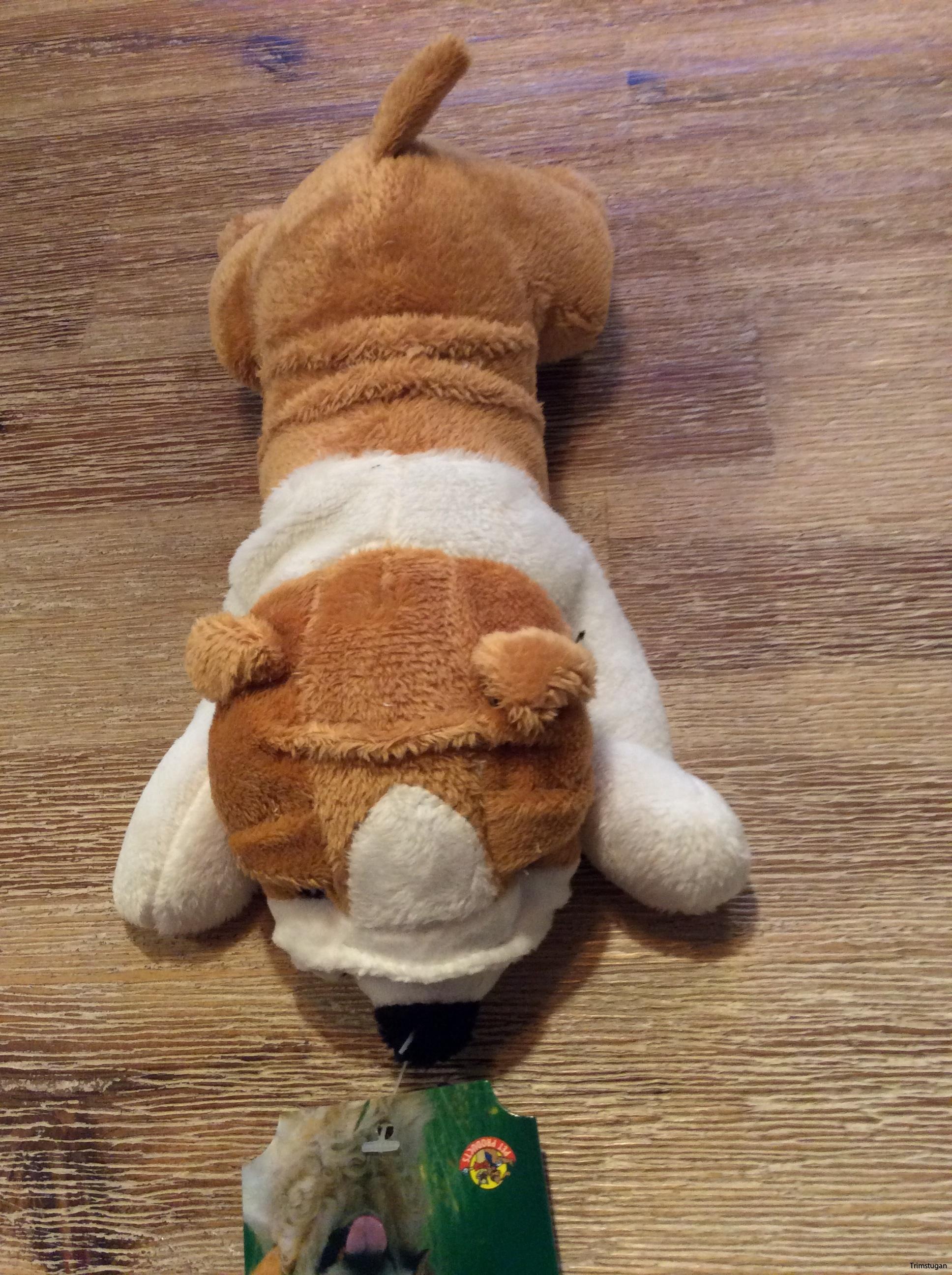 Bulldog hund