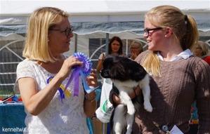 Steffi BIM-valp / BOS-puppy, visad av duktiga Vilma Rydstedt <3 Domare Carin Åkesson.