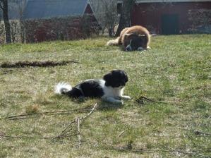 Lilly med kompisen Japp.