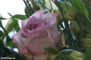 Fick underbara blommor från Wendy <3Got beautiful flowers from Wendy <3