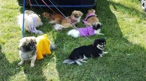 Här pustar alla, våra och Lena Brehmers hundar, ut i skuggan innan det är dags att styra kosan hemåt.