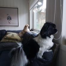 Vakthundarna Viivi och Steffi