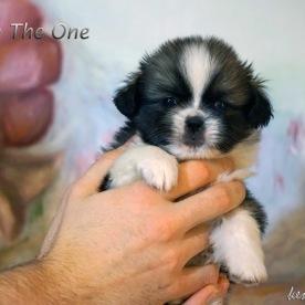 Fabio The One 4v