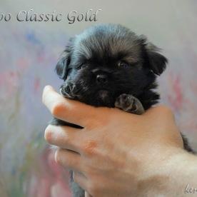 Filippo Classic Gold 4v