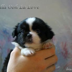 Fenella Ooh La Love