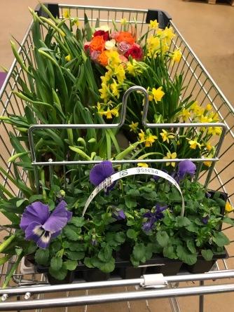 Blommorna som Madeleine gav damen med påskliljorna