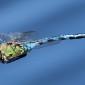 Blue Emperor male - Blå kejsartrollslända hanne
