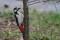 Great Spotted Woodpecker - Större hackspett