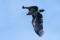 White-tailed Eagle - Havsörn
