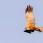 Western Marsh Harrier, male - Brun kärrhök, hanneear
