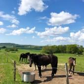 Hästar är vårt liv.