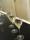 Testing Taittenger Champagne 2