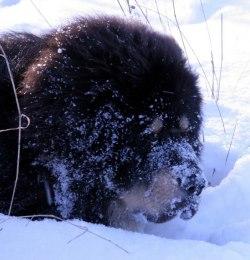Ozo the snowdiver