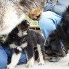 Ruffa is meeting the pack Polaris Viking