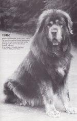Tubo. Uppfödd av artikelförfattaren