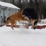 Flying dogs. Disa and Yorek