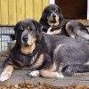 Asti and Polaris leading ladies  P1080065