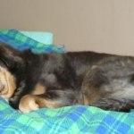 Polaris in bed