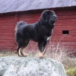 Viking proud on stone