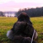 Chiva looking over the Brunnsviken