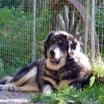 Aquila in dogsyard