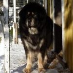 Chiva standing at dogshouseP1000405