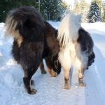 Viking and Polaris tails P1010166