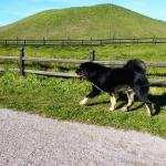 Viking starts his walk P1070992