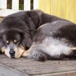 Polaris asleep P1080149