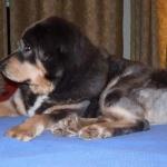 Polaris profile on bed P1080373