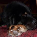 Viking 2 years old