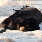Chiva enjoying first sun in January