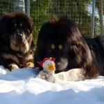 Ruffa Chiva and the hen