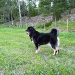 Ruffa guarding over the fields P1120440