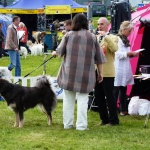 Dogshow time to go  home mummy